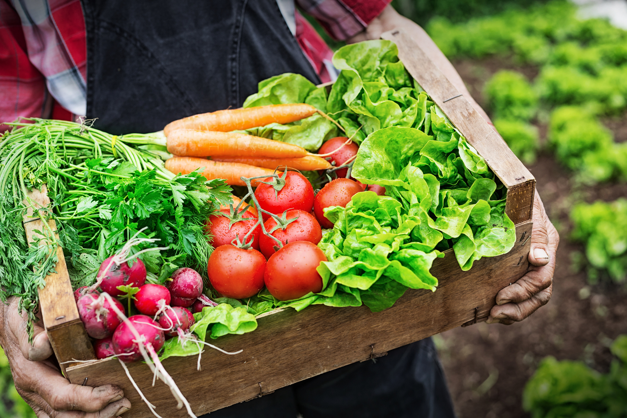 AccorHotels boosts supply chain sustainability with 600 urban food gardens   Waste Management