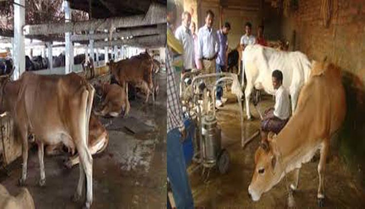 Right price, higher procurement will be the milk shake for ailing Odisha dairy farmers!