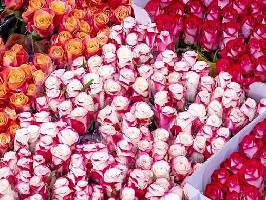 Holland Flower Alliance: Information sharing, packaging key to sustainable air transport of flowers