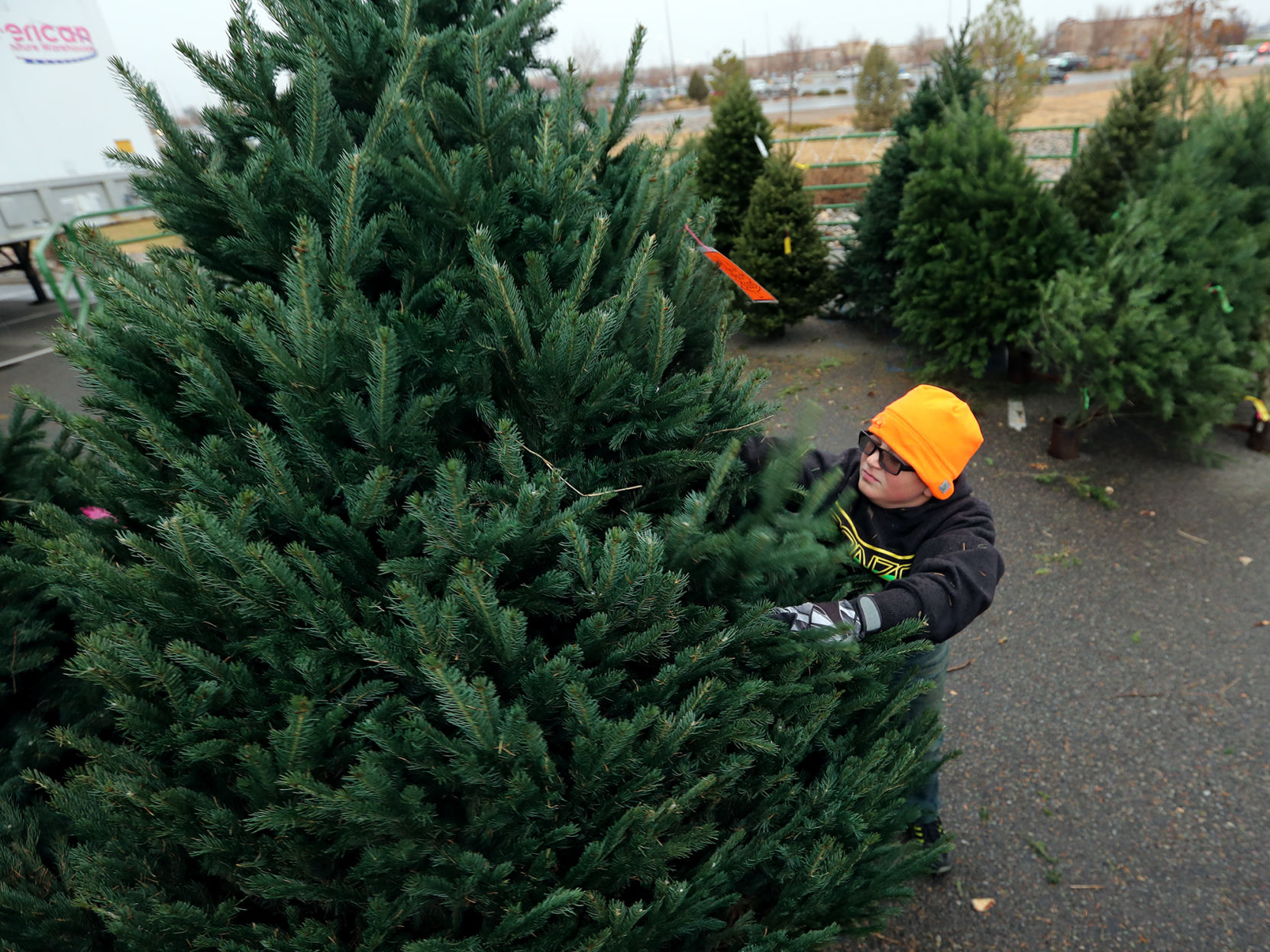300 Christmas trees shipped out to troops and their families