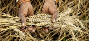 Wheat procurement after middle of April, no word from FCI
