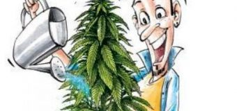 Ganja plants pop up at isolated places as supply chain is broken- The New Indian Express