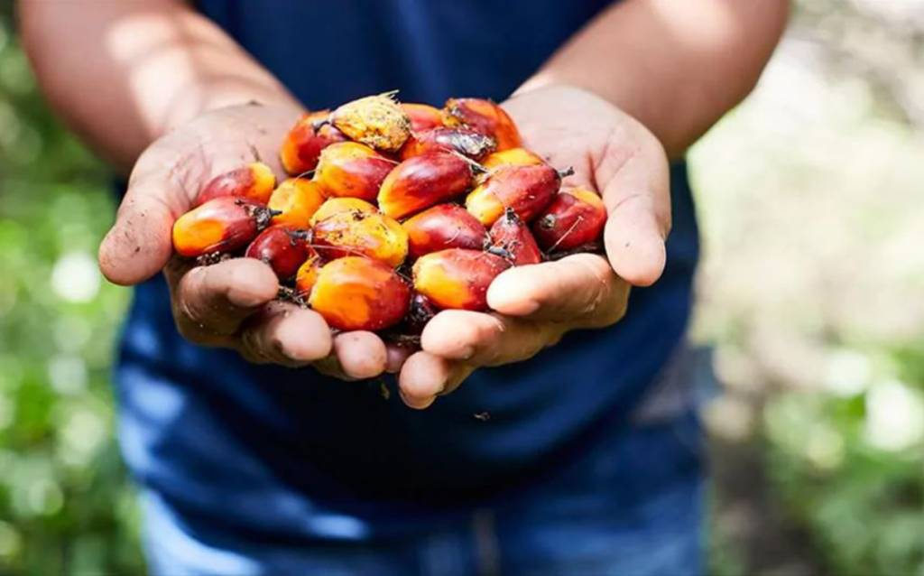 Unilever trials geolocation tech in palm oil supply chain