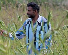Telangana to purchase paddy from farmers in villages