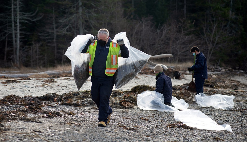 Trash being shipped to an Orrington incinerator from Ireland washes up on shores of Sears Island