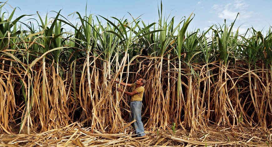 Initiative Towards Securing The Future Of Sustainability In Sugarcane Supply Chain Sector In India